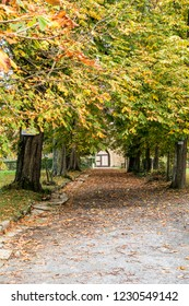 Park in autumn with row of trees