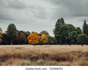 Park in autumn season, rain deer resting on grass, vintage color grading