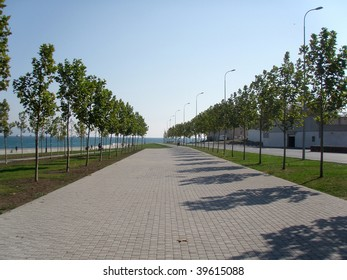 Park avenue with young trees at the sea coast