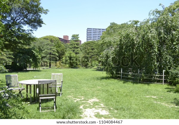 A park with beautiful green grass
