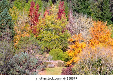 Park Bench amongst Colourful Autumn (Fall) Trees. Mount Lofty Botanic Gardens, Adelaide, Australia
