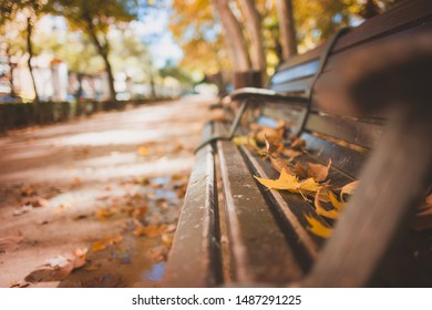 Park bench with autumn leaves on top