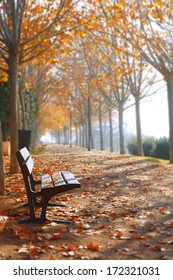 Park bench in autumn season in orange toned