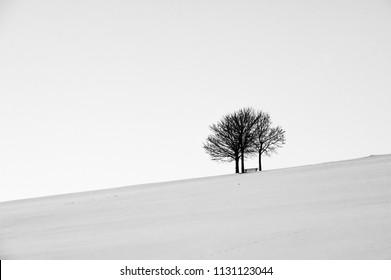 Park bench beneath three trees in snow on hillside