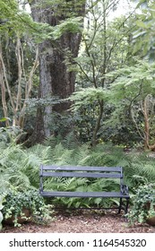 Park Bench in Forest