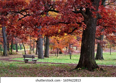A park bench invites hikers to rest under a canopy of oak trees in peak autumn color.