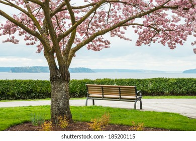 Park bench looking out to sea. Cherry tree in bloom in foreground. Copy space.