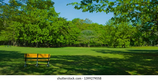 Park bench in the morning