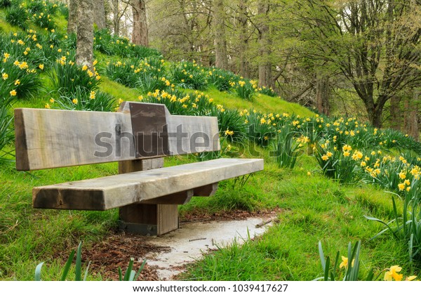Park Bench on Beautiful Daffodil-Covered Hillside