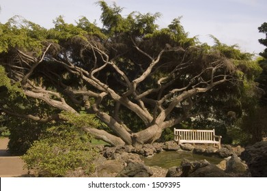 A park bench sits beside a gnarled tree and a pool of water at Deep cut park, Middletown, NJ