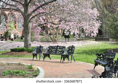 A park bench sits empty behind the Smithsonian with Magnolia Tulips on the ground. Washington DC