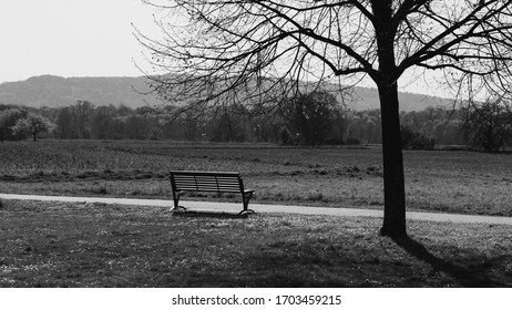 A park bench with a tree on the right side