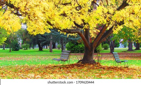 Park bench under autumn tree