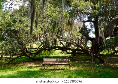 Park bench under oak trees with spanish moss in Georgia