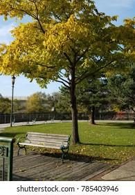 Park bench under a yellow autumn tree