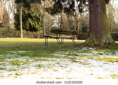 Park bench in winter next to a big Tree Trunk