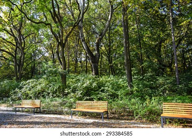 Park benches in the woods