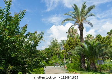 Park with a bridge and palm trees in Kemer, Turkey