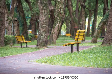 Park, a chair in the park, relaxing, Banyan trees on Dunhua Road, Taipei. feeling calm