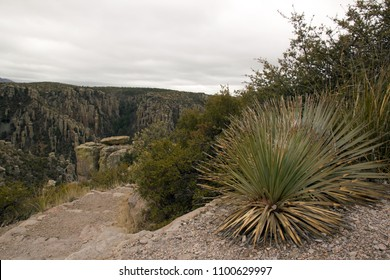 The park of Chiricahua, yuccas and vegetation - Arizona - the United States