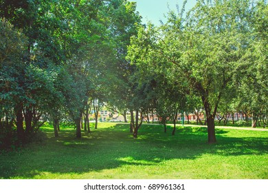 Park in the city center in bright sunny summer weather