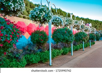 Park composition of umbrellas and flowers. Miracle Garden. Dubai. Emirates. November 2019