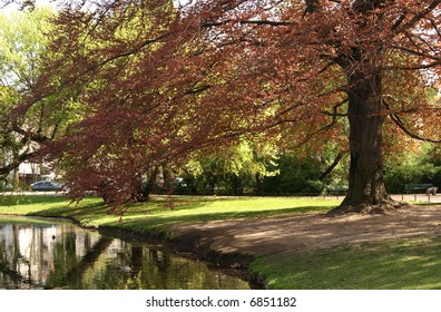 A park with a copper beech hanging over a small pond, room for text