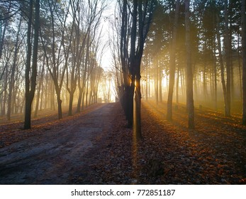 park at dawn