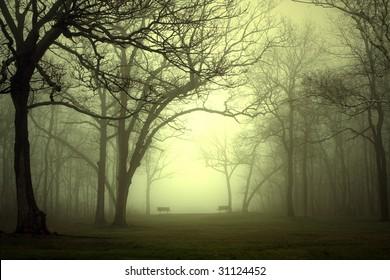 Park in dense fog with light trying to break through