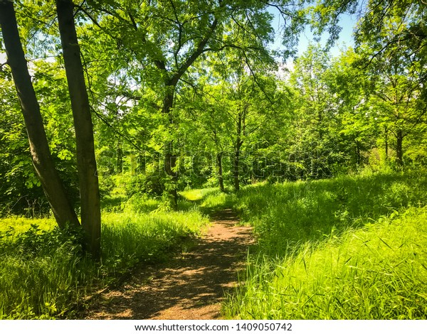 Park forest ground trail natural outdoor path way for walking and promenade.