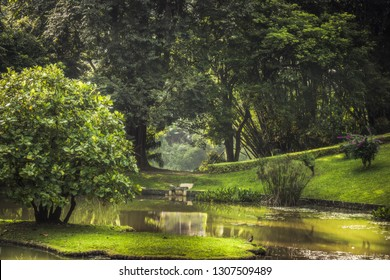 Park garden scenery with landscape design in Royal Garden Peradeniya in Sri Lanka nearby Kandy surroundings