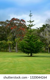 Park and gardens at Waitangi Treaty Grounds historic and cultural site, Bay of Islands, Northland, New Zealand