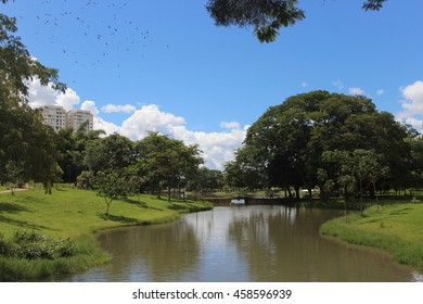 Park in Goiania Goias, Brazil - Green trees and and pond detail in a beatiful day