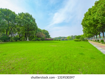 Park grass and lush forest under spring sunny sky