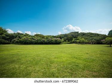 Park Grassland