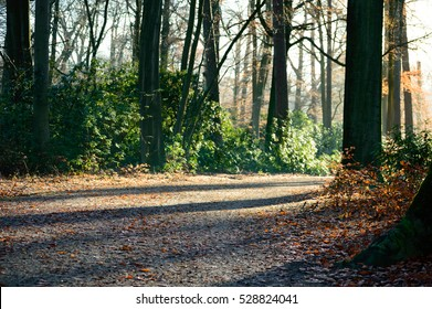 Park gravel road with autumn colored trees and green plants on the sides