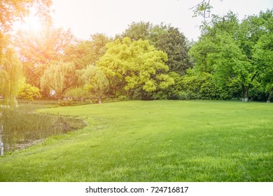 Park green forest