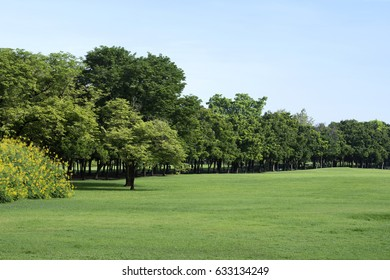 Park with Green Grass and Trees
