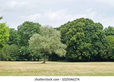 Park with green trees under grey sky