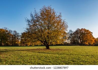 park in hamburg, autumn, colors