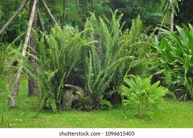 In the park have many plant Boston Fern or Nephrolepis exaltata (The Sword Fern)a species of fern in the family Lomariopsidaceae.Born in Australia The fern is quite large and long Stalks.
