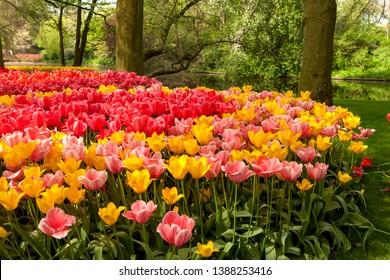 Park Keukenhof with beautiful tulips in Lisse, Netherlands