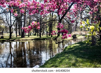 Park lake in blooming spring