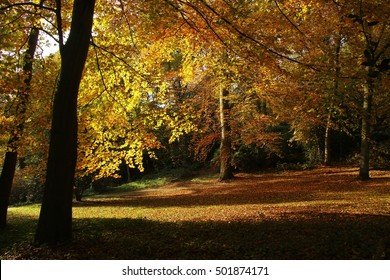 Park landscape in fall, yellow leaves and silhouettes of trees / Knoops Park, Bremen, Germany