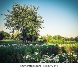 park landscape with lone tree