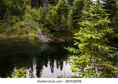 Park landscape.Trees and River