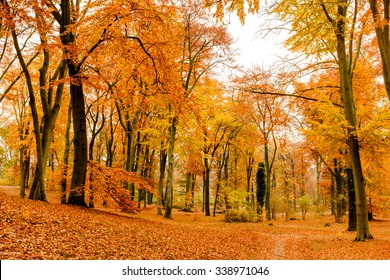Park lane in Potsdam Babelsberg with fallen yellow and orange sycamore fallen leaves and colorful foliage on trees