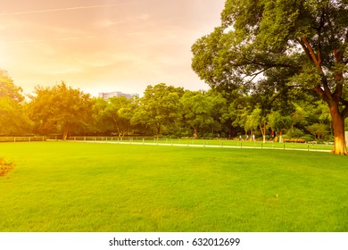 Park lawn and green forest