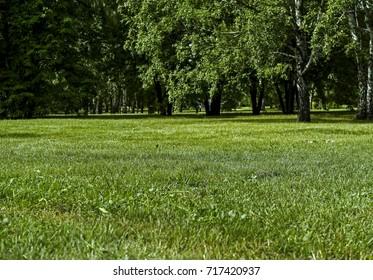 Park lawn. Green lawn. Park. Green grass background. Park background.