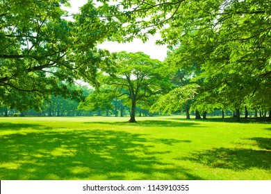 park lawn , shade of trees